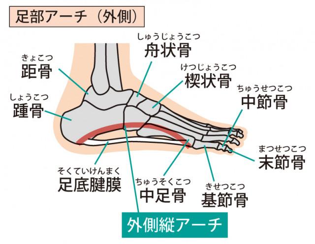 足底腱膜のイラスト